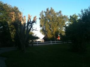 Sommarkväll på landet